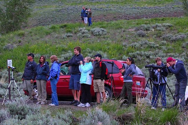 IMG_3229 Bear Rush, Yellowstone National Park