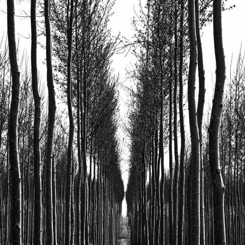Znalezione obrazy dla zapytania tumblr photos black and white