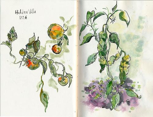 October 2012: Hidden Villa by apple-pine