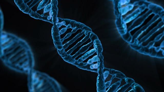 Dna, Biology, Medicine, Gene, Microbiology, Analysis