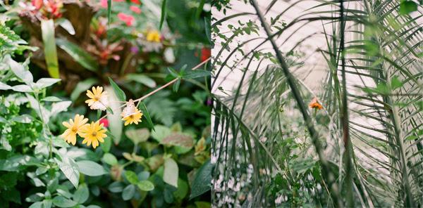 2011_1015_UFButterflies02.jpg