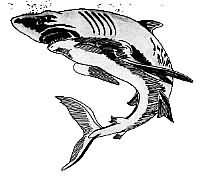 Black And White Shark Tattoo Design