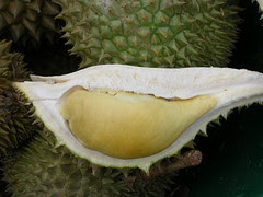 Malaysia King Of Fruit - Seulas Durian ( Kucin...