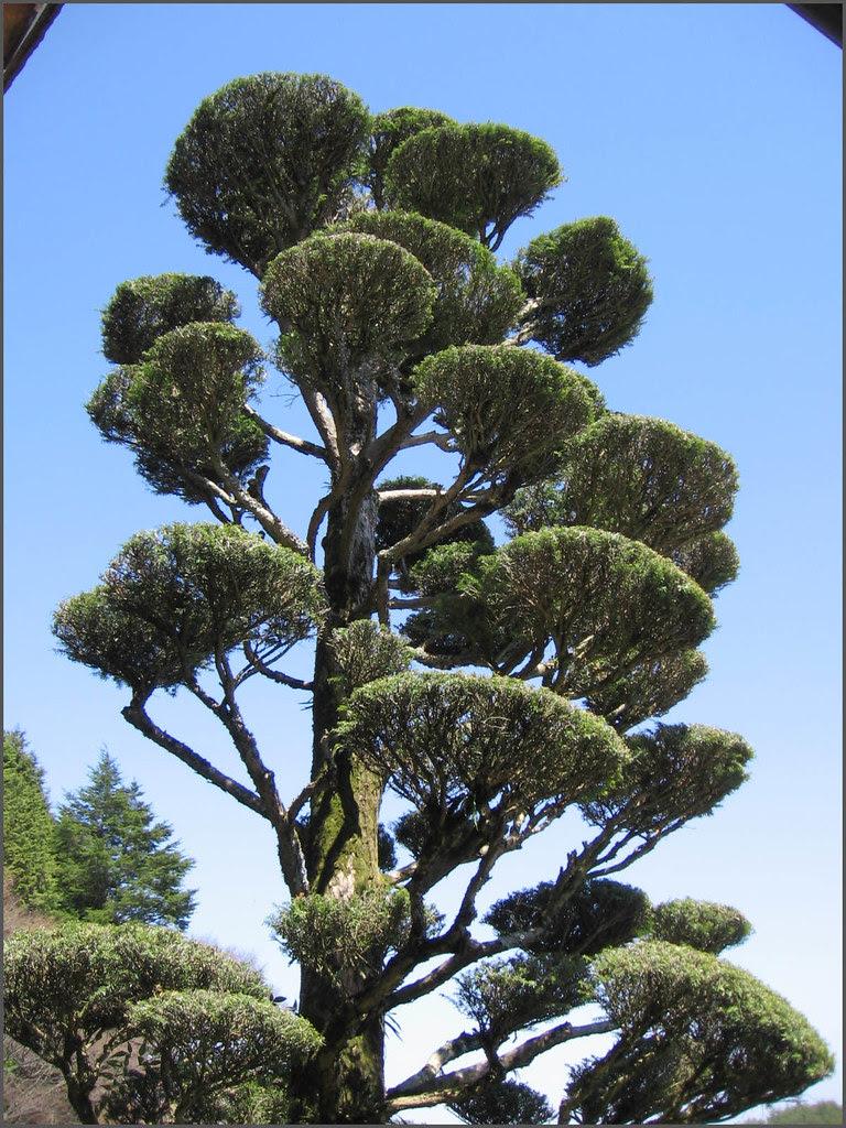 093 tree dragon toward heaven