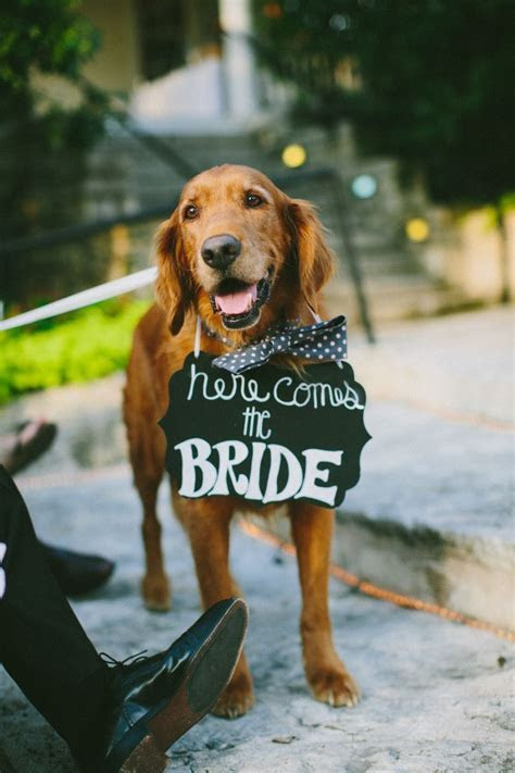 25  best ideas about Dog ring bearers on Pinterest