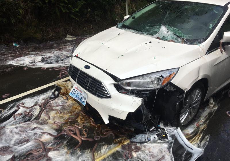 Isto é o que acontece quando um caminhão cheio de peixes-bruxa tomba ao seu lado na estrada 02