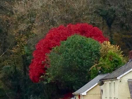 autumnblaze.jpg