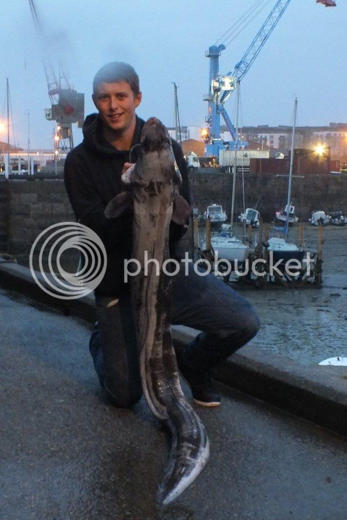 39lb 12oz Shore Caught Conger
