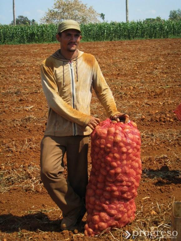 En el proceso de resaca se da por terminada la cosecha.