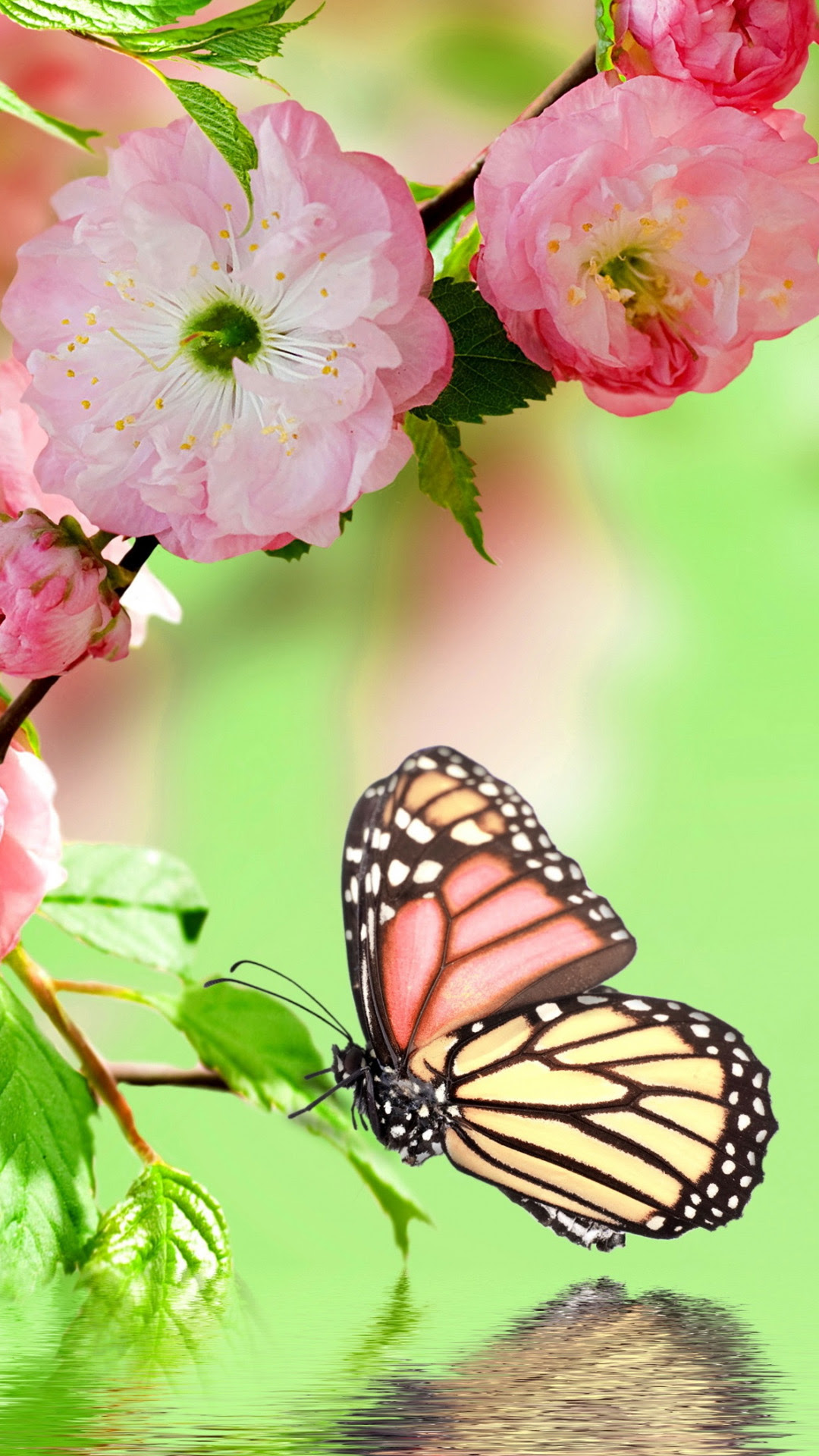 Butterfly Wallpaper For Android | HD Wallpapers ...