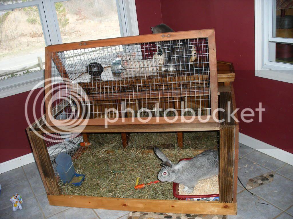 Flemish Giant Rabbit Cage - photo#4