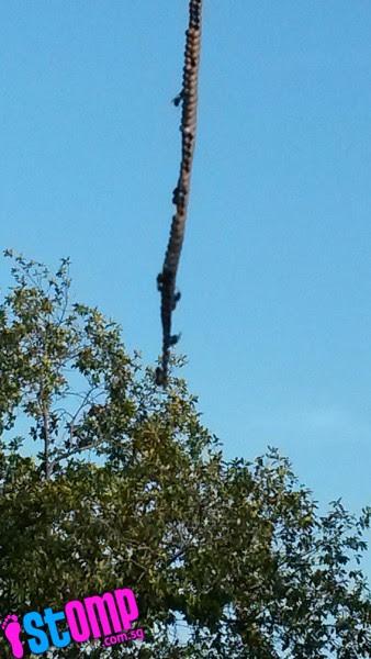 Beehive hangs from Woodlands bus stop