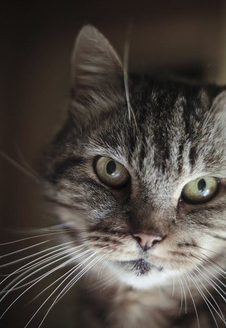 Peter's cat, Pussier- 412