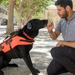 פיתוח ישראלי: אפוד למתן פקודות מרחוק לכלבים בצוותי הצלה - Doctors Only
