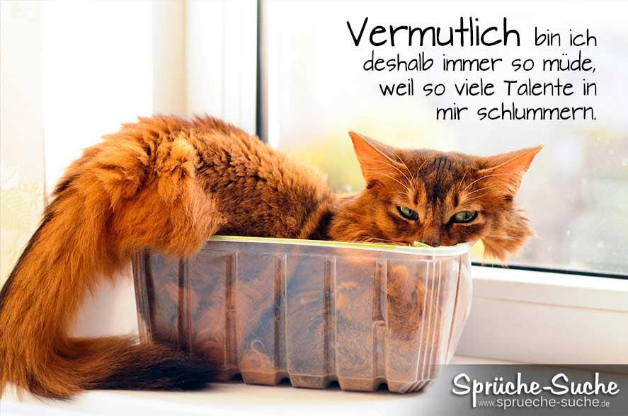 Katze geburtstagssprüche Geburtstag Sprüche