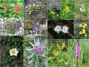 mosaique fleurs