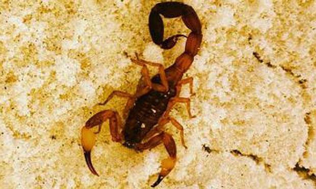 Maior parte dos casos registrados em Pernambuco foi por picada de escorpião / Foto: Agência Brasil