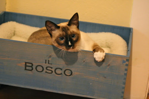 Il Bosco in his wine box cat bed! Heart melt.