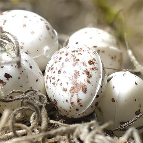 Mini Speckled Artificial Bird Eggs   Birds & Butterflies