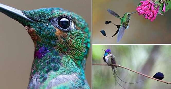Lindas imagens para você admirar a beleza de beija-flores