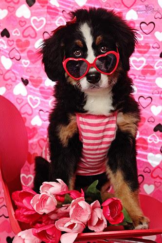 5/52 Happy Valentines Day!