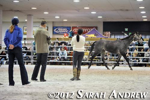 Retired Racehorse Training Program: Trainer Challenge: Brazilian Wedding