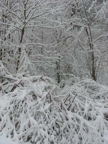 snowy14Jan08-8329