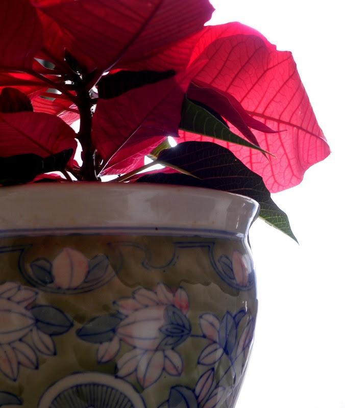 Winter Rose Series