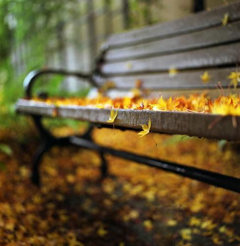remnants of fall por manyfires