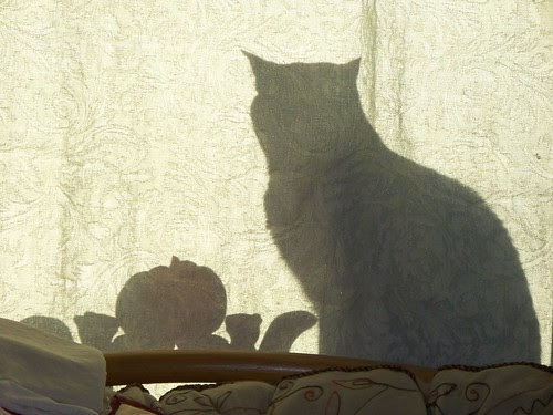 George in the window