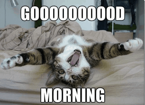 Good Morning Pictures Funny Babangrichieorg
