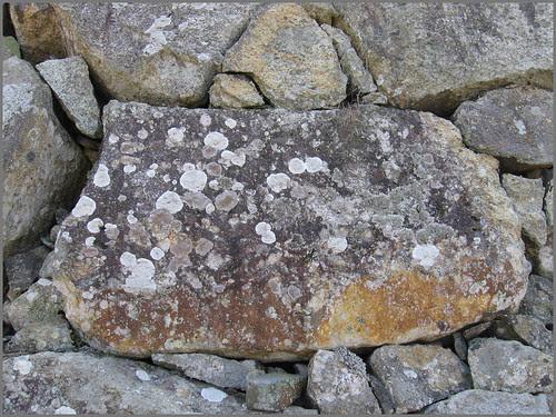 18 a stone comes alive