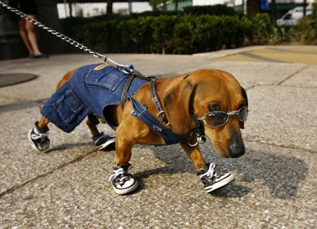 Cão chamado 'Café' foi fotografado no México usando óculos de sol, tênis nas quatro patas e uma roupinha jeans. (Foto: Marco Ugarte/AP)