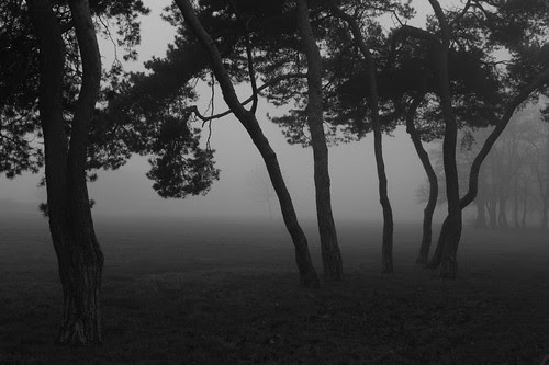the mist through the trees by ultraBobban