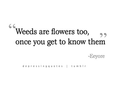 Weeds Are Flowers Too Once You Get To Know Them Eeyore Picture