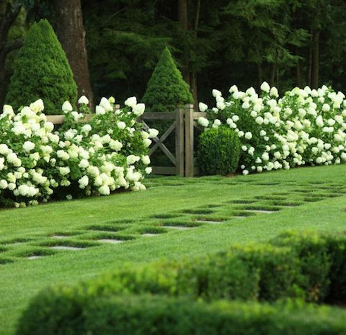 Hydrangeas and topiary from Modern Country Style blog: How To Use Topiary In A Modern Country Garden
