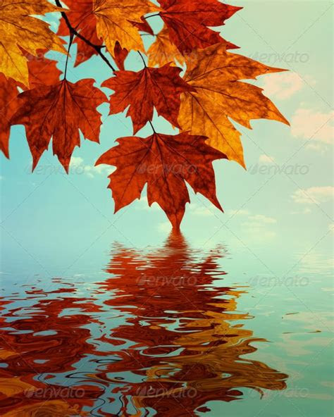 autumn water reflection background stock