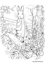 8400 Peter Rabbit Coloring Book Pages Free