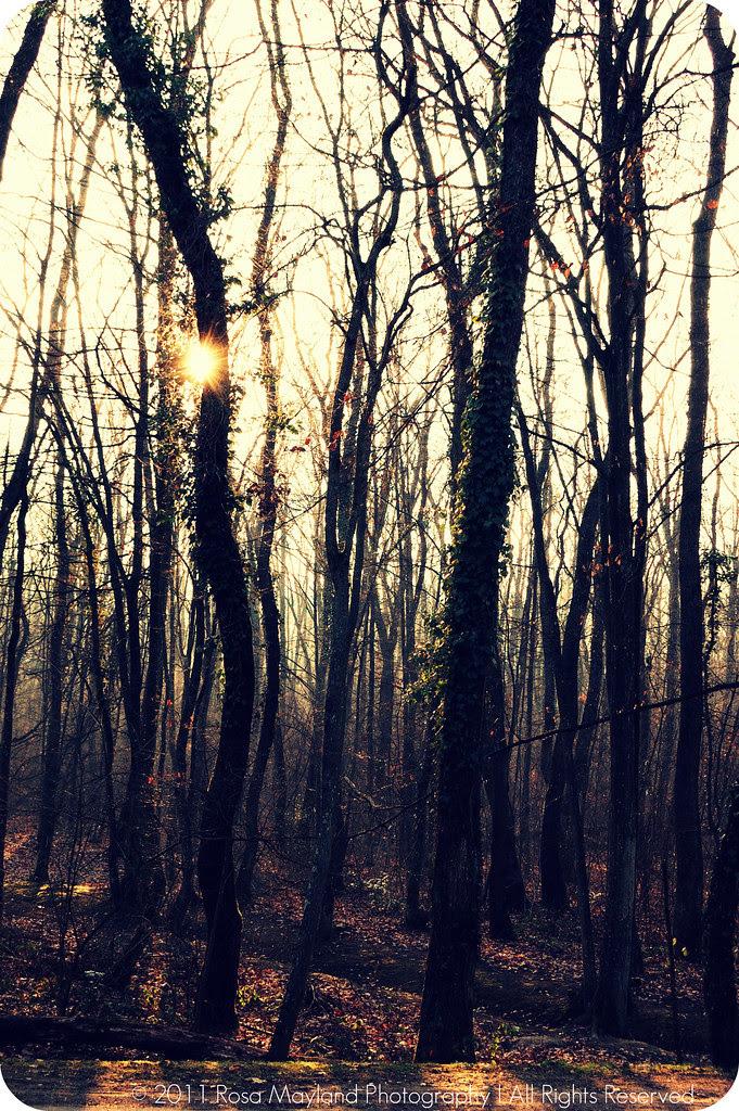 Spring Forrest 1.2 bis