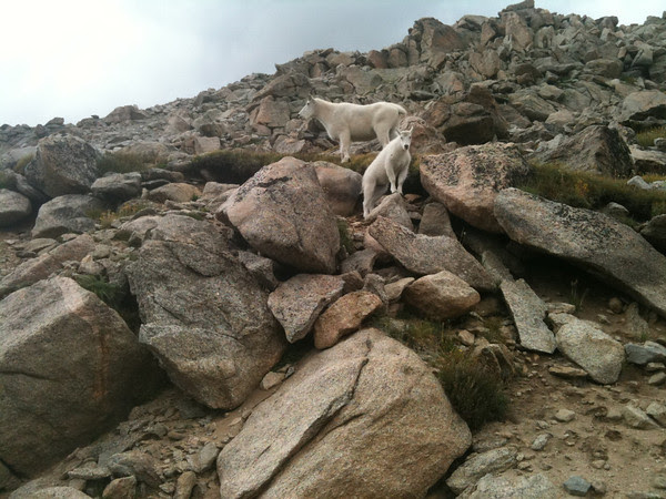 mountain goat break