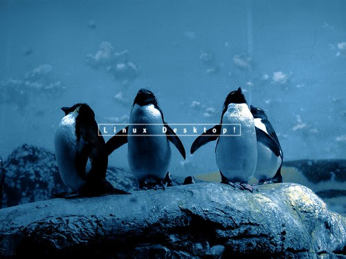 Penguingang_1600x1200