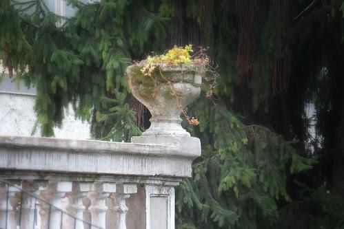 Un angolo di fiori d'autunno by Ylbert Durishti