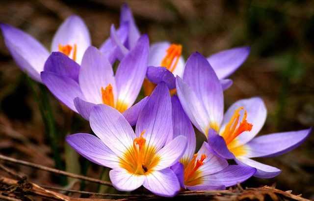 Ever Heard of Expensive Taste inwards Flowers?
