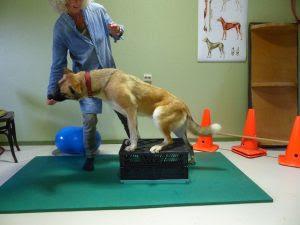 exercícios equilíbrio dos cães