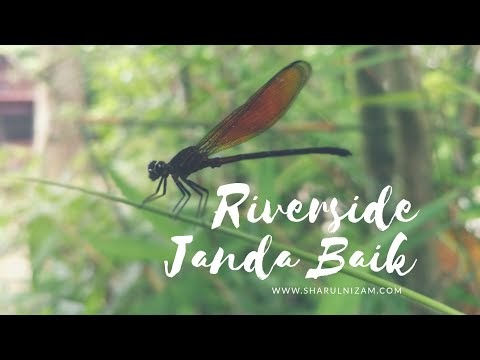 Bermain Tiub Di Riverside Janda Baik, Pahang