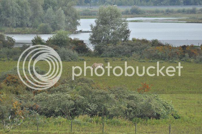 photo 15-10-2013StaatsbosbeheerZuid-Holland046-border.jpg