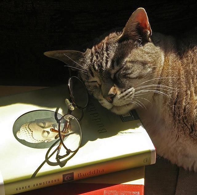 Кот-буддист. Необычное фото