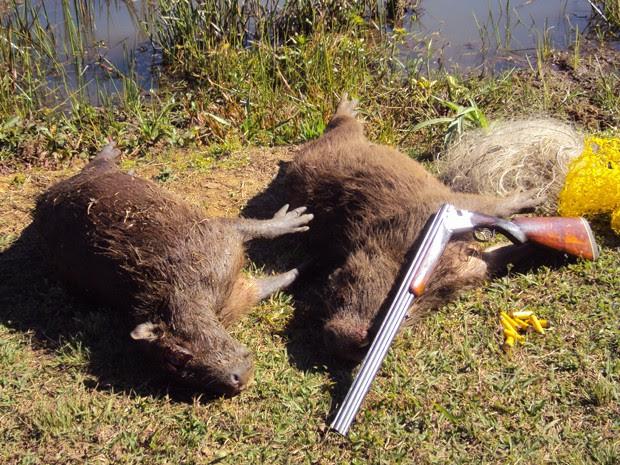 Dupla é presa caçando paca e capivara a tiros em Varginha (Foto: Polícia Militar Ambiental)