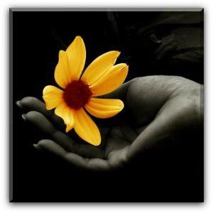 Flor amarela.
