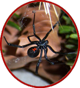 Michigan Spiders Can They Kill You May Group Realtors